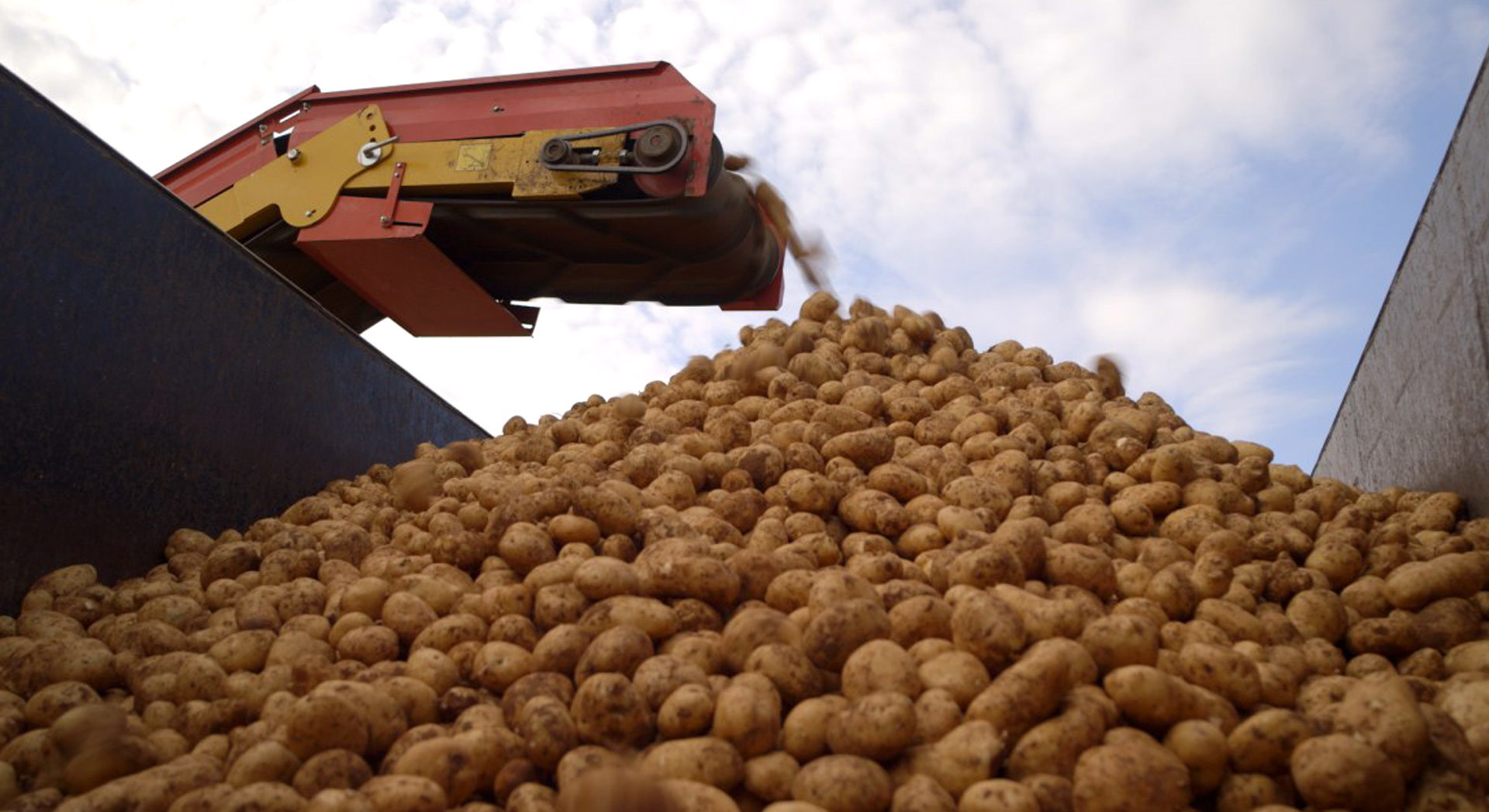 Know Our Food - Is it true that McDonald's potato supplier provides genetically modified potatoes?